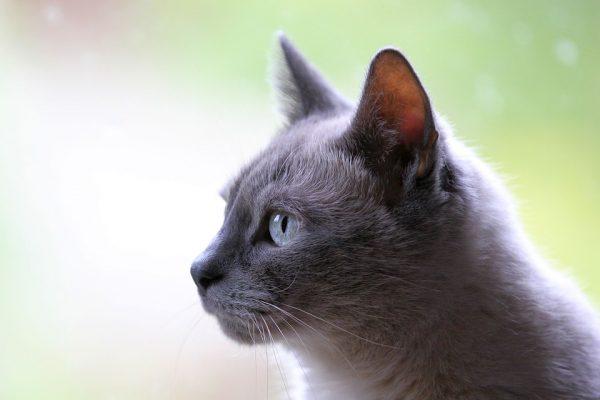Getreidefreies Katzenfutter mit hohem Fleischanteil